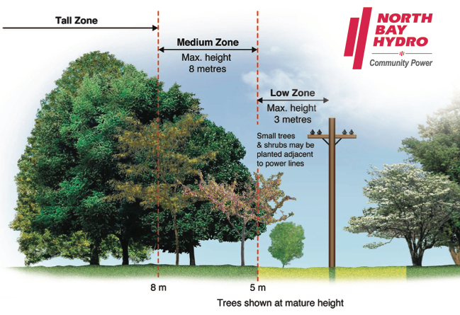 Right Tree Right Zone